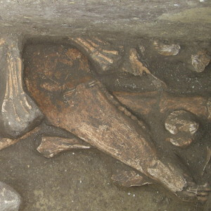 Régészeti feltárások